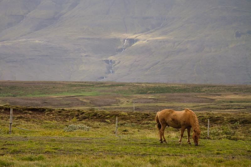 2014 ICELAND-126.jpg
