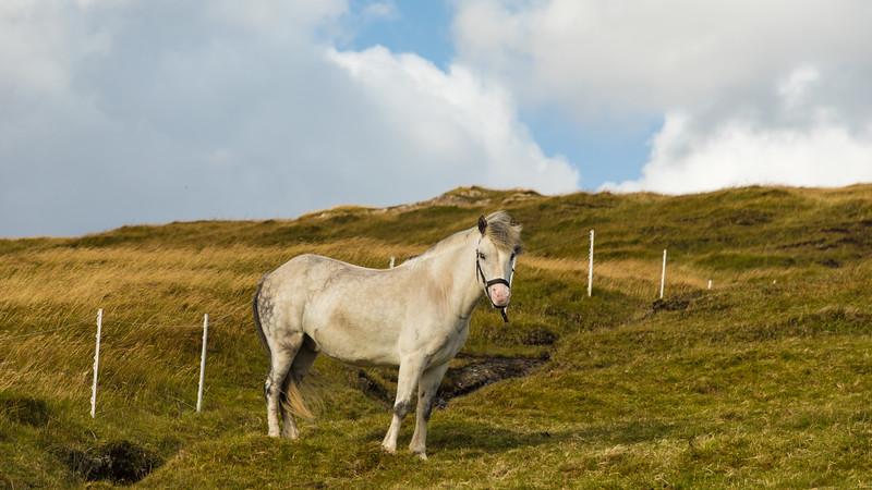 Faroes_5D4-3216.jpg