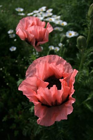 Flowers_060510_0025.JPG