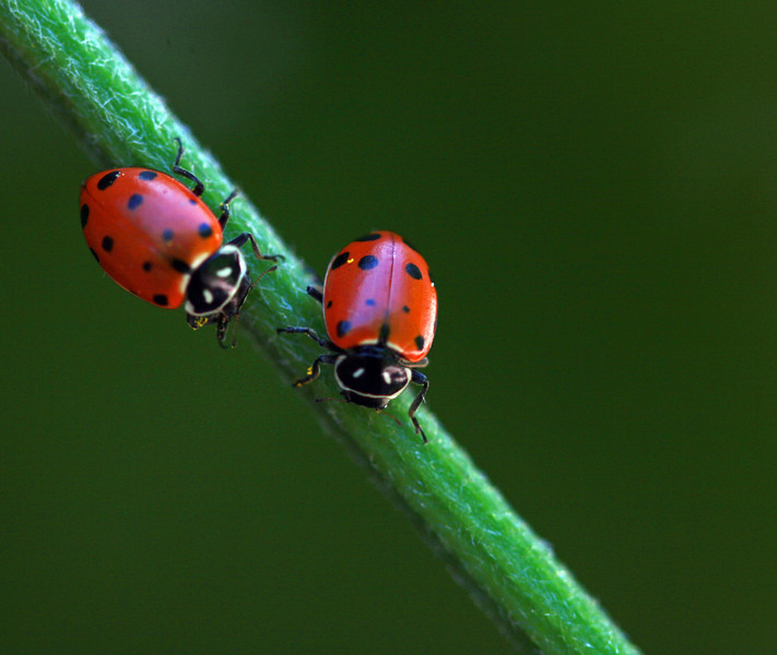 lady bug 6.jpg