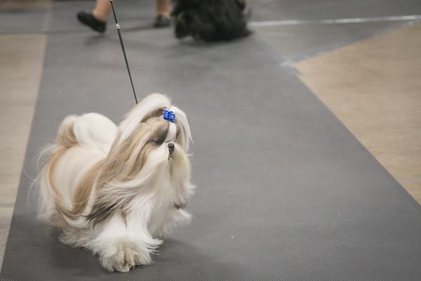 National Dog Show