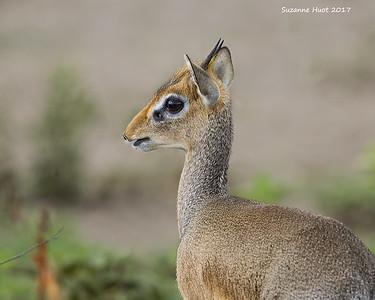 Mammals of Tanzania