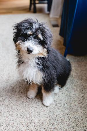 AF Puppy Nov 2019