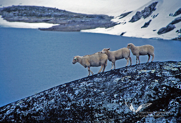 Norway 2004