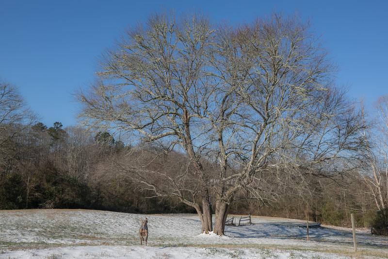 January Snow-11.jpg