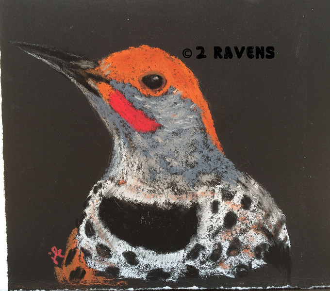 Northern Flicker pastel Private Collection