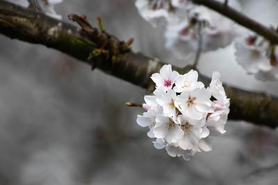 Davidson Flora