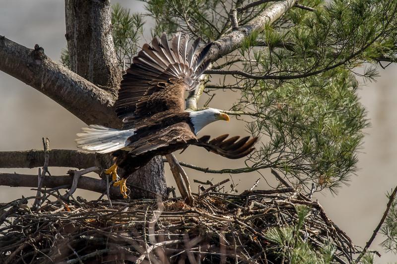 ulster-eagle-101.jpg