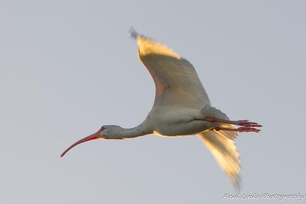 2013 Christmas Birds