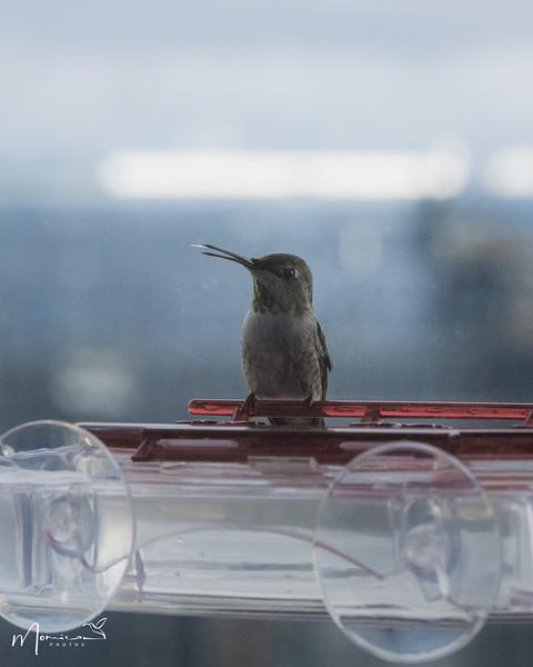 2021 - The Hummingbird Chronicles-1097_edit-2.jpg
