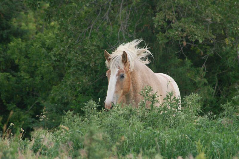 Mane Horse .jpg