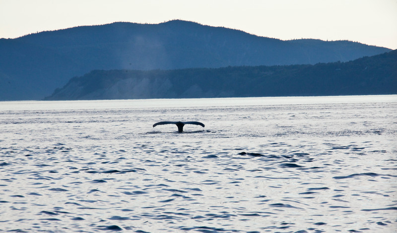 2011 quebec whale watching (71 of 80).jpg