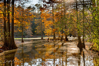Autumn at Trap Pond State Park