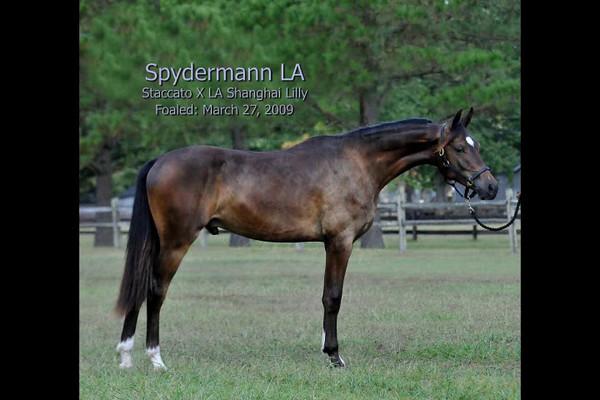 Spydermann LA