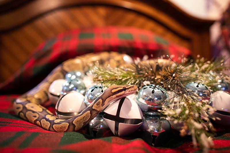 ChristmasSnakes19_0033.jpg