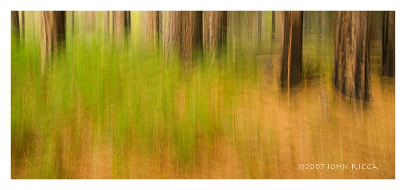 Yosemite Woods Shake 1.jpg