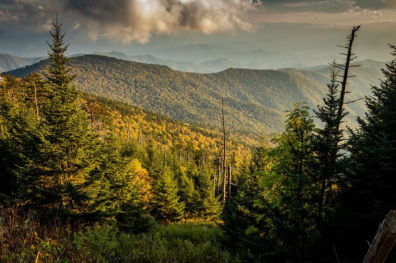 WVWS_Smoky Mountains National Park-8318.jpg