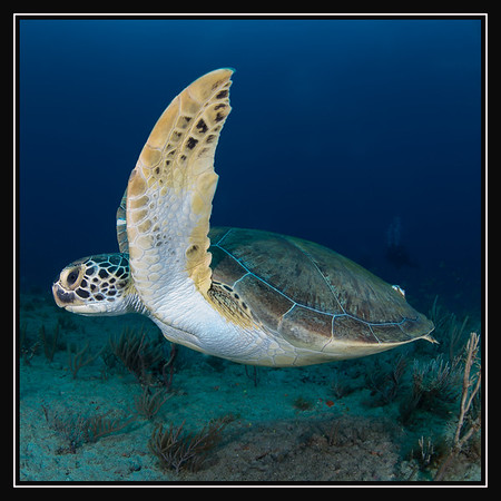 Daily Dive Trip Galleries By Date
