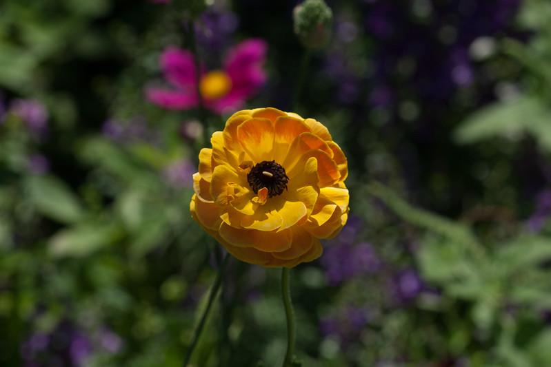 2009 06 30_NY Botanical Gardens_0743.jpg