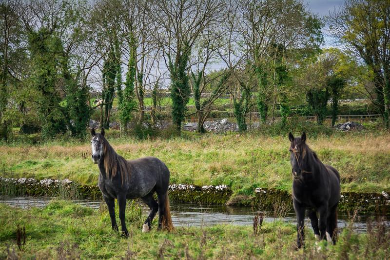 Ireland367.jpg