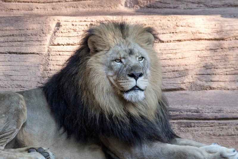 Riverbanks Zoo Nov 2016