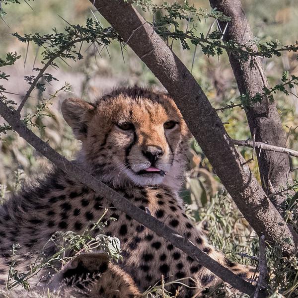 Tanzania_Feb_2018-54.jpg