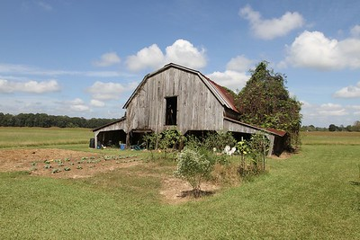 Louisiana BARNS