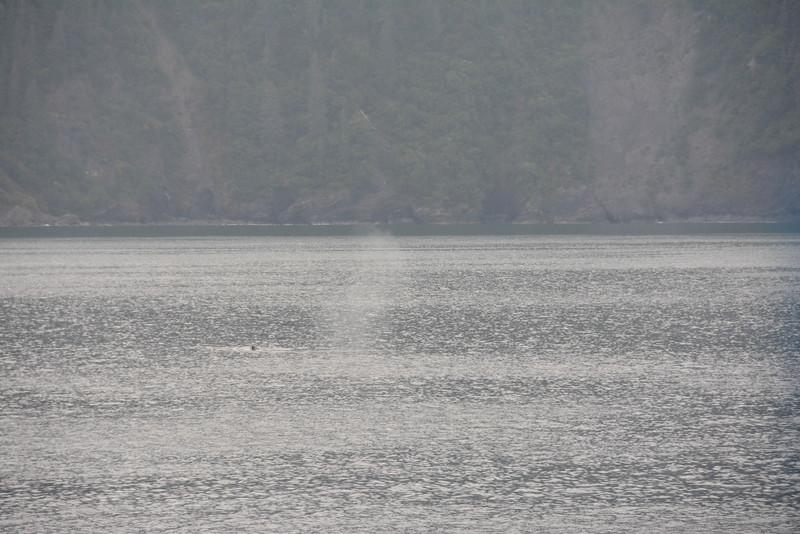 Kenai-Fjords-38.jpg