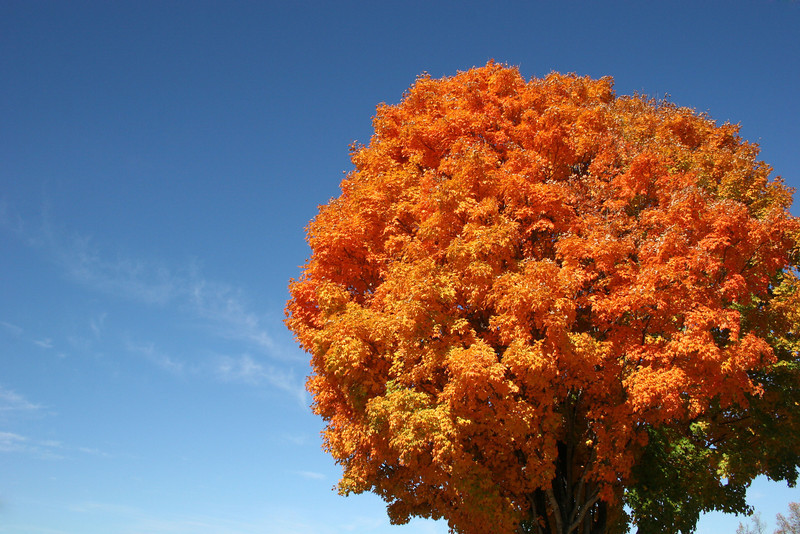 One of the many changing trees on the campus of Gardner-Webb University on a Fall day.