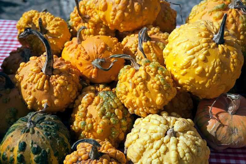 Pumpkins for sale, town of Casta–o del Robledo, province of Huelva, Andalusia, Spain