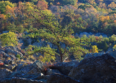 Great Falls, Oct 2012