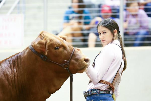 Beefmaster Junior Nationals
