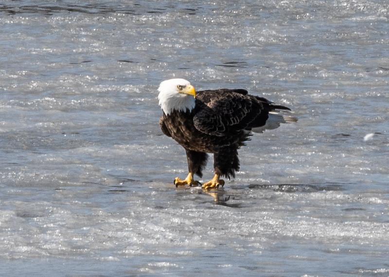 03-17-2020-eagles-2.jpg