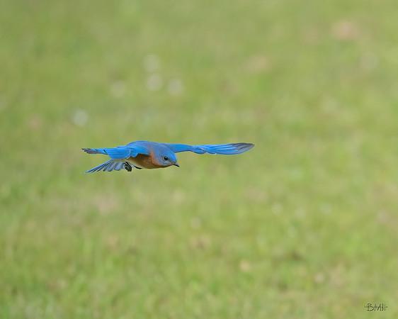 X Bird GIFs