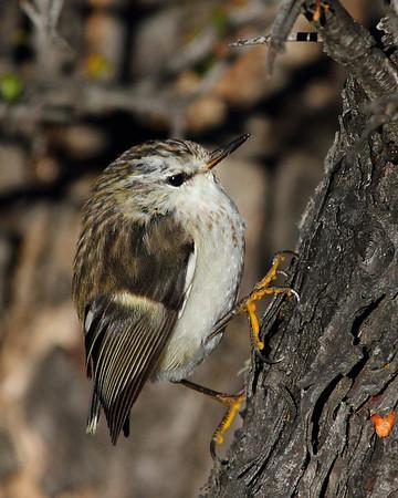 Spotting & Approaching Birds  -  Wilderness Magazine