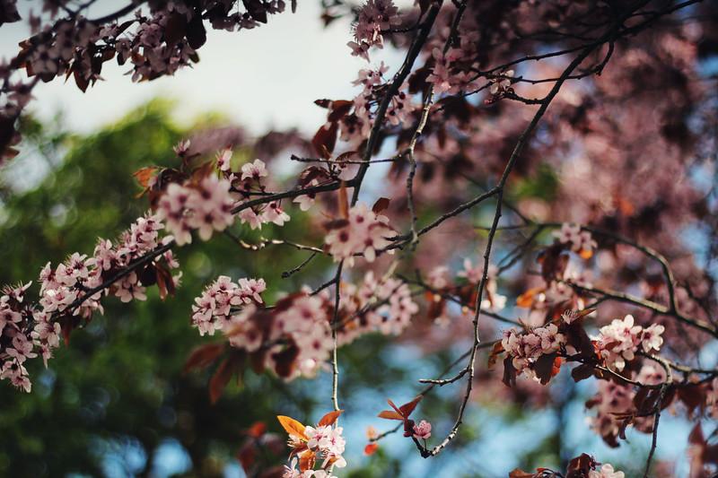 Spring Blooms...
