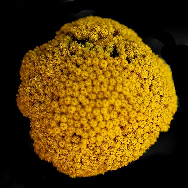 August 28 - Yellow.jpg