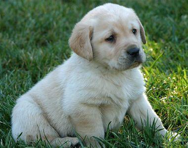Puppies week 5