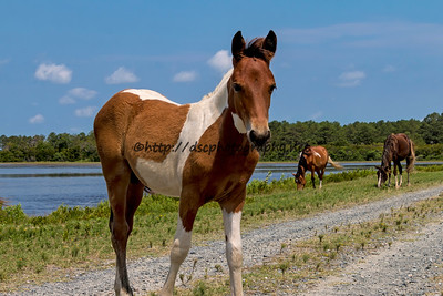 Miracle's Natural Beauty's Filly
