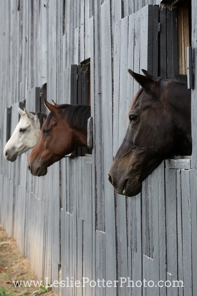 Horsekeeping, Health, and Stable Management