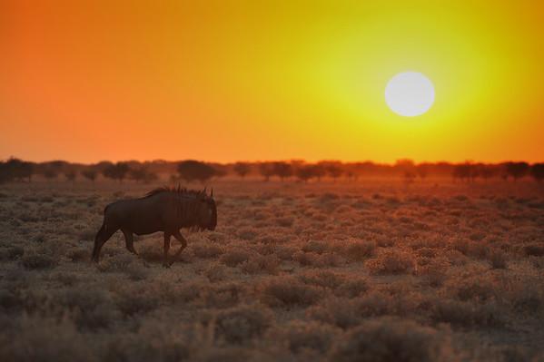 Namibia - 2014