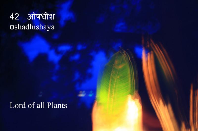 42  oṣadhīśa.jpg