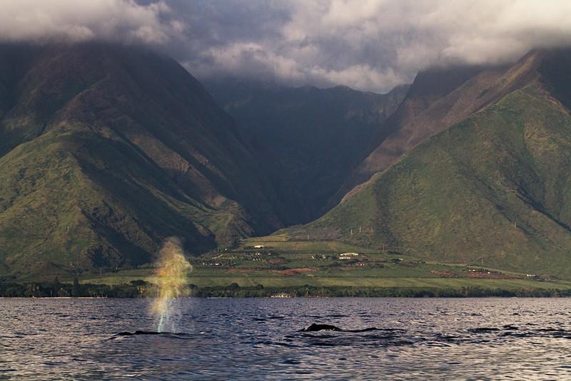 West Maui Rainblow