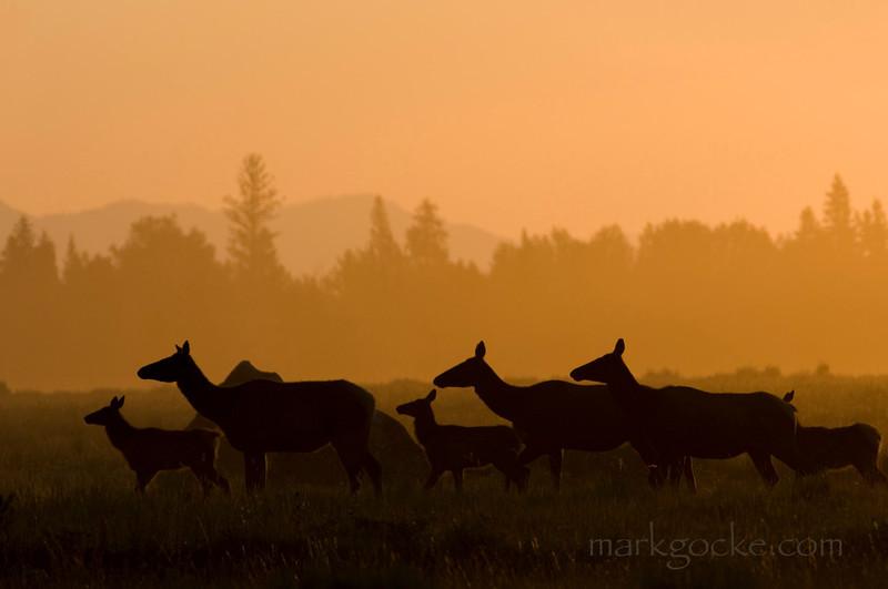 elk-sunrise6-mg.jpg