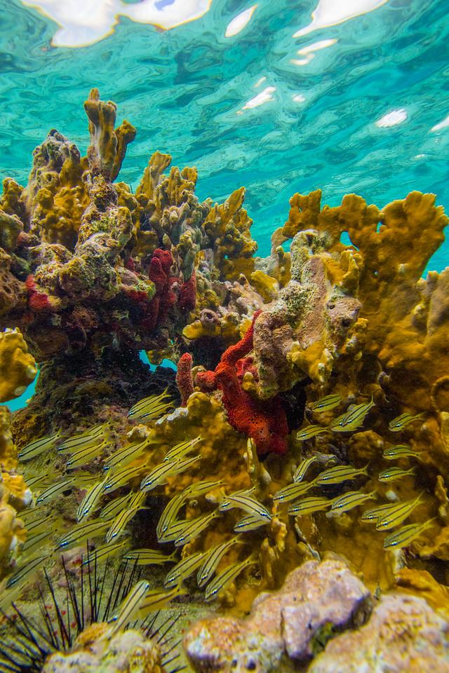 Coral Preschool
