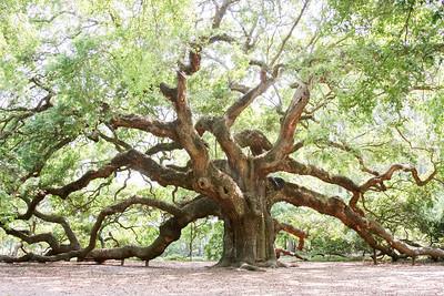 The Famous Angel Oak