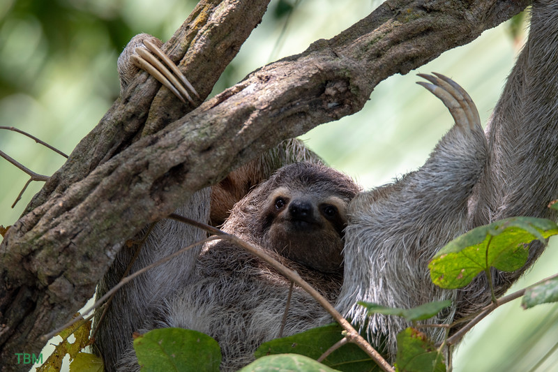 Sloth and pup