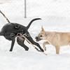 Dogs - Saturday, Feb. 7, 2015 - Frame: 3709