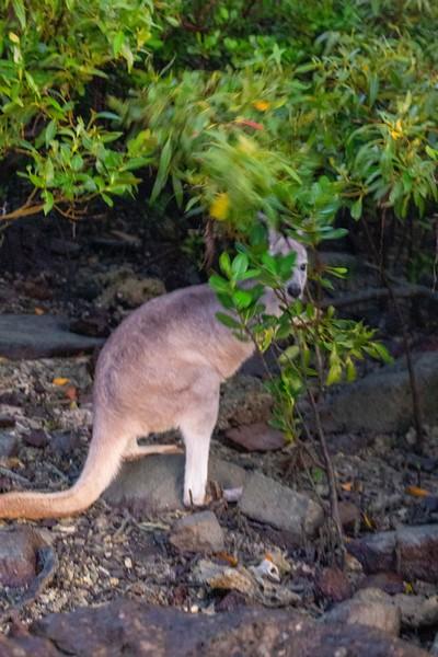 Australia_493.jpg