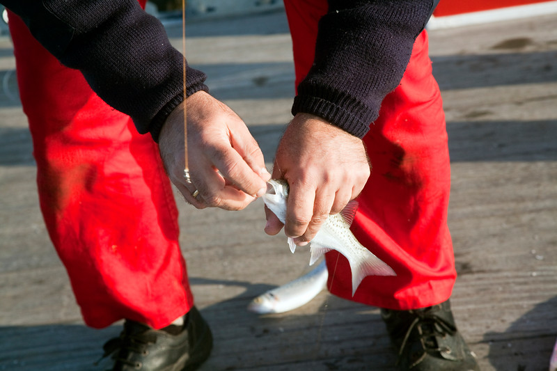 Fisherman capturing sea basses, town of Huelva, Andalusia, southwestern Spain